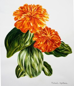 Zinnia Watercolour