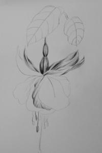 Southampton 1 Fuchsia graphite 1