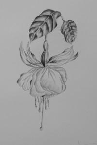 Southampton 1 Fuchsia graphite 3