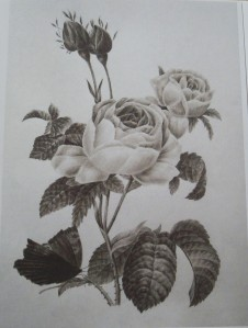 Southampton 1 Rose graphite
