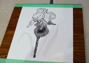 Southampton 10 Iris pen & ink 1