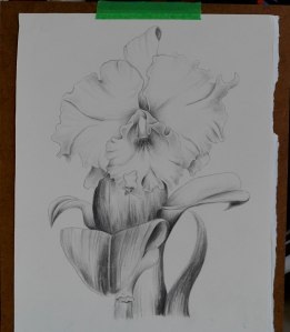 Photo 4 Orchid B&W