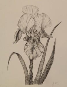 september-workshop-37-iris-jane-mulcahey