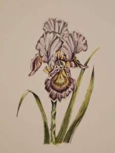 september-workshop-41-iris-suzanne-hase