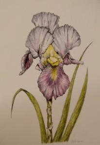 september-workshop-43-iris-wendy-shearet